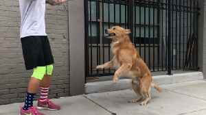 These Pups Got Ups [Video]