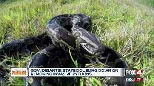 Governor DeSantis is getting tough on removing invasive pythons [Video]