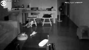 Web Extra: Earthquake Cats [Video]