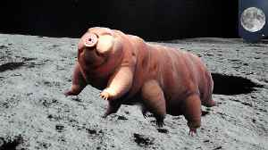 Tiny 'water bears' may be alive on moon after crash landing [Video]