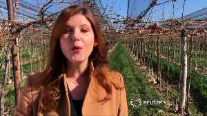 Argentine wine makers nervous about EU trade deal [Video]
