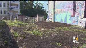 Students Unveil Mural And Peace Garden In Wake Of Dorchester Shootings [Video]