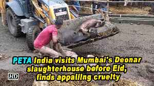 PETA India visits Mumbai's Deonar slaughterhouse before Eid, finds appalling cruelty [Video]