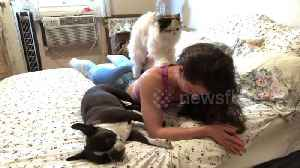 That Saturday morning feeling: Persian cat massages its owner [Video]