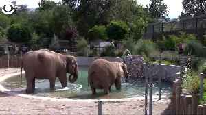 WEB EXTRA: Elephants Cool Off In Water [Video]