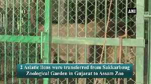 Two Asiatic lions transferred from Gujarat Zoo to Assam Zoo [Video]