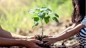 Uttar Pradesh Plants 220 Million Trees In One Day--One For Every Resident