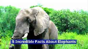 5 Incredible Facts About Elephants (World Elephant Day, August 12) [Video]