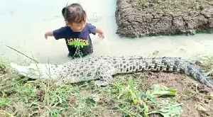 Little girl plays with crocodile on the rice field irrigation [Video]
