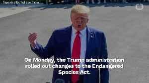Trump To Overhaul Endangered Species Act [Video]