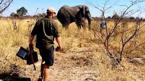 News video: Meghan Markle And Prince Harry Share Photos To Mark World Elephant Day
