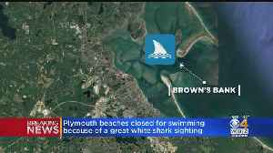 Plymouth Beaches Closed After Great White Shark Sighting [Video]
