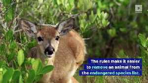 Trump Admin Weakens US Endangered Species Act [Video]
