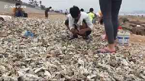 Local citizens collect oysters blown onto beach by typhoon Lekima in China [Video]