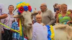 Ukraine's gorgeous goats compete for beauty crown [Video]