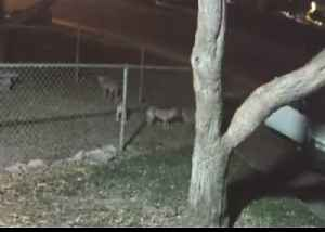 News video: Police Issue Appeal After 5 Dogs Thrown Over Fence at Animal Shelter