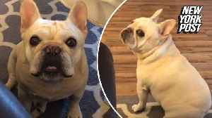 This impatient pup sure loves his Cheerios [Video]