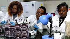 Kenya's worsening antibiotic resistance worries doctors [Video]