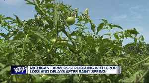 Michigan farmers struggling with crop loss and delays after rainy spring [Video]
