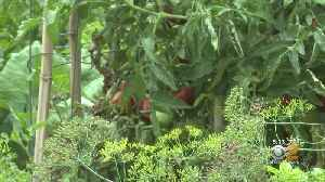 New Jersey Garden Closed Over Lead Fears [Video]