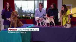 The Secret Life Of Pets 2 movie clip - Pet Massage [Video]