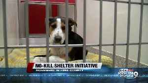 Delaware is now a no-kill animal shelter state. Could Arizona be next? [Video]