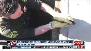 California deputies help rescue ducklings from storm drain [Video]