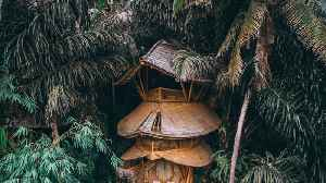 Spectacular Bamboo Treehouse That Sits In The Indonesian Jungle Is Available To Rent [Video]