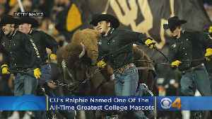 CU's 'Ralphie' Named One Of The All-Time Greatest College Mascots [Video]