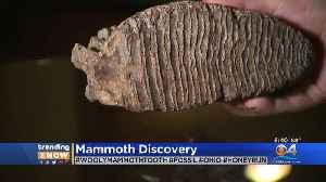 News video: WEB EXTRA: Boy Discovers Woolly Mammoth Tooth At Family Reunion