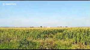News video: Russian passenger plane makes emergency landing in cornfield near Moscow