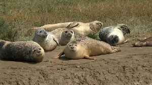 Watch: Promising signs for the Thames's seal population [Video]