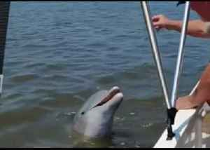 Charleston Family Encounter a Dolphin While Boating on the Stono River [Video]