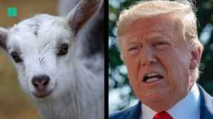 Goat Herder-In-Chief [Video]