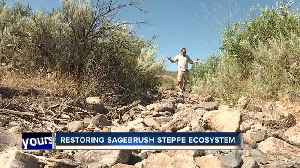 Bruneau Owyhee Sage Grouse habitat project aims to remove juniper trees [Video]