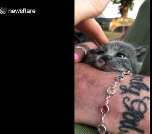 Adorable newborn US kitten battles to stay awake while being stroked by her owner [Video]