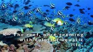 Rapture Reef damage [Video]