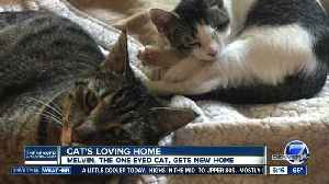 Melvin, the one-eyed cat, gets new home [Video]