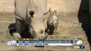 News video: San Diego Zoo rhino could help save endangered species