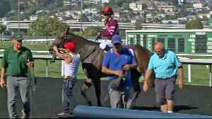 Racing at Golden Gate Fields Begins Under Cloud from Recent Horse Deaths [Video]
