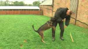 Premier league footballers using protection dogs for security [Video]