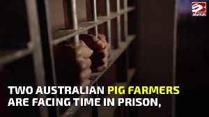 Farmers jailed for smuggling pig semen in shampoo bottles [Video]