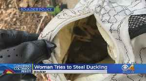 Woman Cited After Police Find Duckling In Her Backpack [Video]