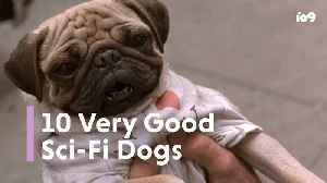 10 Very Good Sci-Fi Dogs [Video]