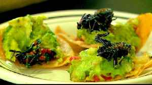 Mexico Cuisine: Edible insects growing up in popularity [Video]