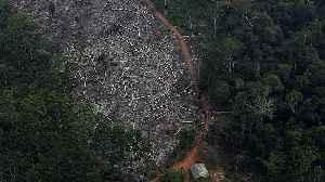 Brazilian government defends record on Amazon deforestation [Video]