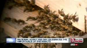 Scatter Joy Acres celebrates National Honey Bee Day [Video]