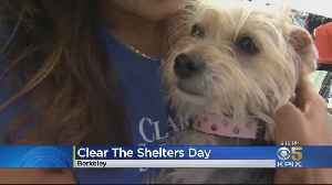 CLEAR THE SHELTERS: Pets finds new homes at Bay Area 'Clear The Shelters' event [Video]