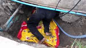 Brave rescuers wade through filthy Thai sewer to catch python terrorising homes [Video]