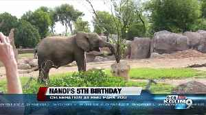 Reid Park Zoo celebrating 5th birthday for Nandi the African elephant [Video]